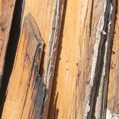 Termite infestations in Los Angeles County
